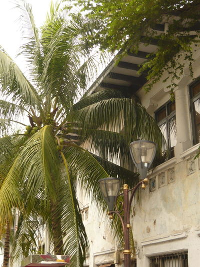 Hear the sounds of history. Once a beautiful spot, competing with Singapore, maybe. Now worn down. Architecture Built Structure Green Color Growing Kuta Low Angle View No People Colonial Style Outdoors Palm Tree Residential Building Residential Structure Tree Palmtree Tropical Climate