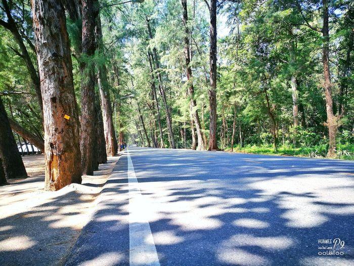 ธรรมชาติ หาดสวนสน บ้านเพ ระยอง P9 Oo Leica Huawei_P9 ๐๐LikhiT๐๐ Day Shadow Tree Nature Sunlight Outdoors No People Growth The Way Forward Road Scenics Beauty In Nature