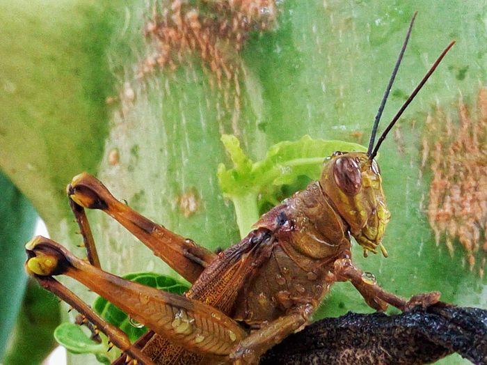 After rain. Grasshopper Insect Wet Rainsplash Animal Nature