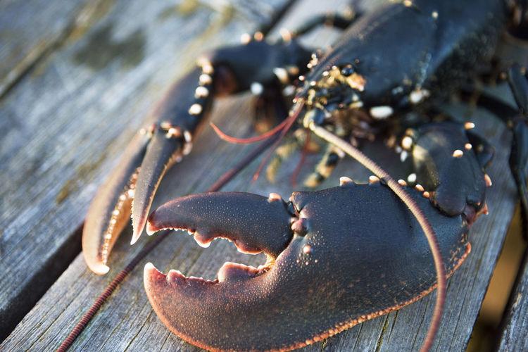 High angle view of crab on table