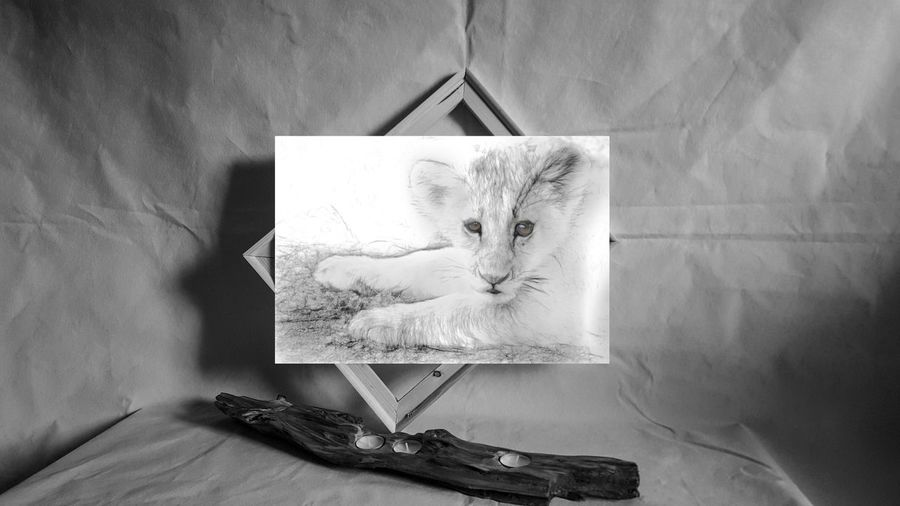 http://etsy.me/2lcFLO2 little bastard is so cute you could keep him.... shame he belongs exactly where I found him in the Ngorongoro Crater Art Photography ArtWork Art And Craft Etsyseller Artofvisuals EyeEm Best Shots Gallery_of_all Art Gallery Beauty Nature Beauty In Nature Lion Cub Lions