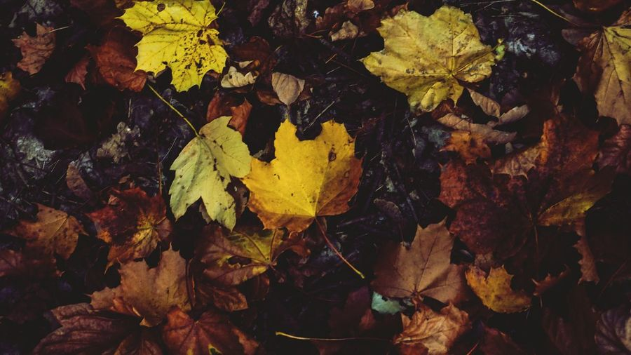 Leaf Plant Part Change Plant Autumn Nature Tree Day No People Yellow Beauty In Nature Growth Leaves Dry Close-up Land High Angle View Outdoors Full Frame Tranquility
