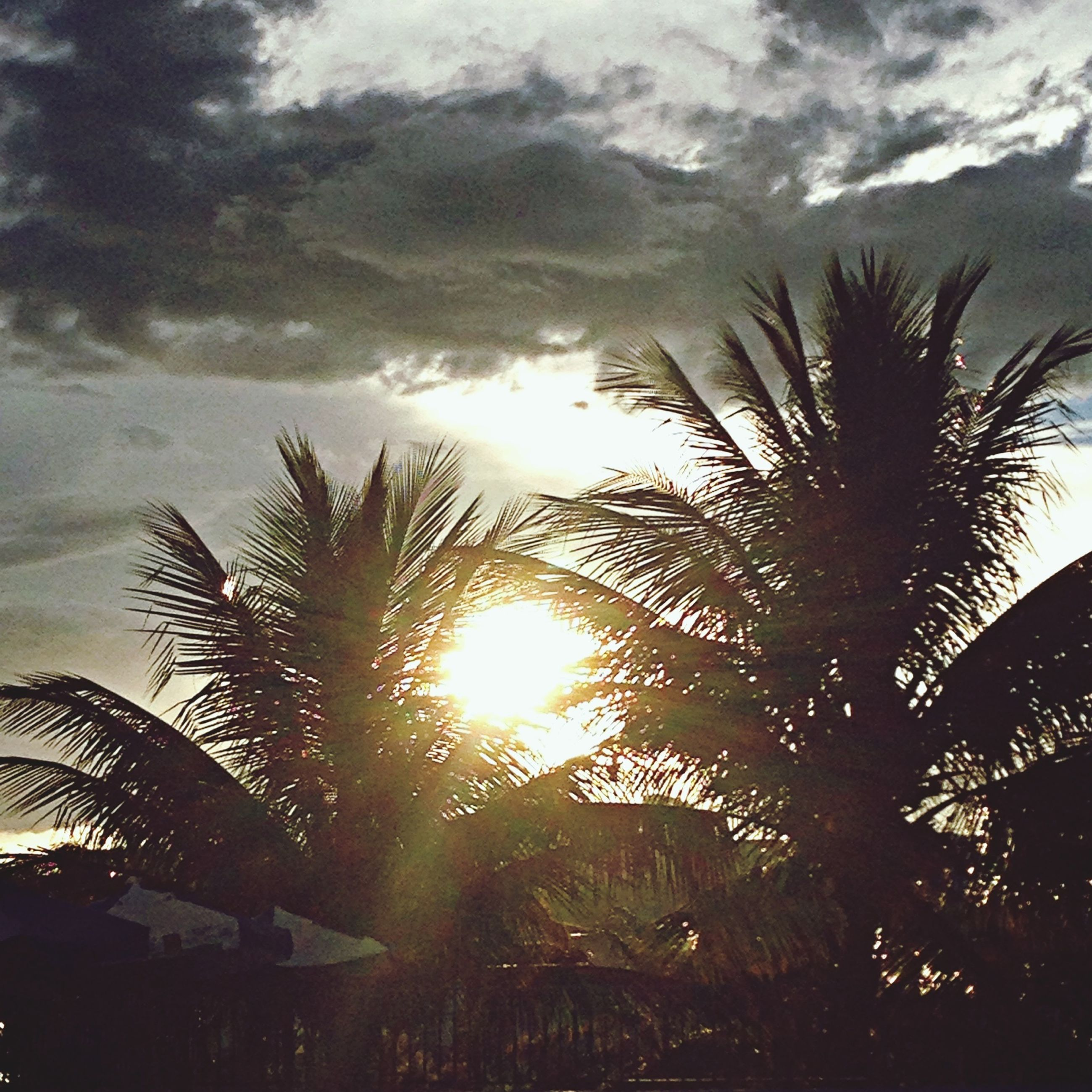 palm tree, sky, cloud - sky, tree, sun, growth, tranquility, sunset, nature, silhouette, beauty in nature, tranquil scene, scenics, cloudy, sunlight, water, cloud, sunbeam, sea, no people