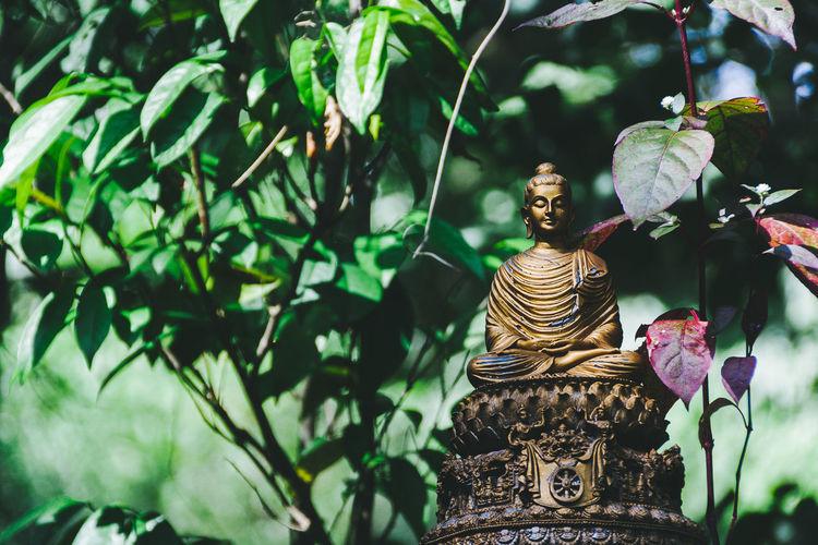 Buddha Budda