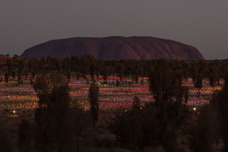 After Dark Art Installation Fields Of Light Lights Trees Uluru Environment Field Growth Idyllic Landscape Mountain Nature Tranquil Scene Tranquility My Best Photo The Great Outdoors - 2019 EyeEm Awards