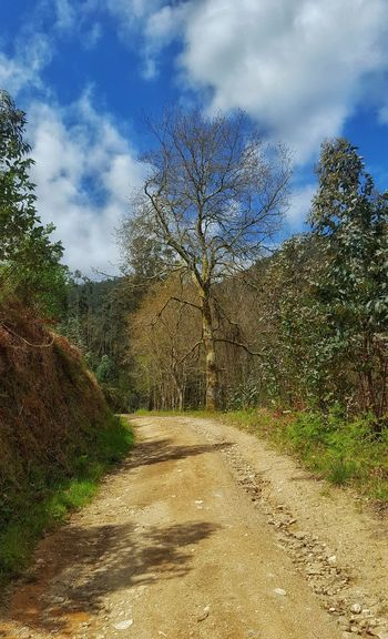 El camino... My Favorite Photo Tree_collection  Trees Nature Photography Nature_collection Naturephotography On The Way
