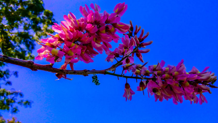 Flower Branch Tree Beauty In Nature Nature Clear Sky Outdoors Sky Day Beauty In Nature Nature Photography Plant Leaf