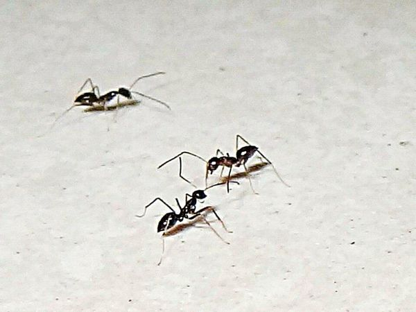 Tired from work? Should learn from em most determined creatures Ants Blackants Ants' View... Ants Life Ants Close Up Hello World