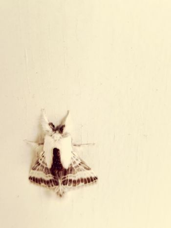 Moth One Animal Animal Themes No People Day Outdoors Close-up Nature Insect Insect Photography AndroidPhotography