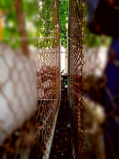Metal Net Chainlink Fence Protection Cage Outdoors Day No People Nature