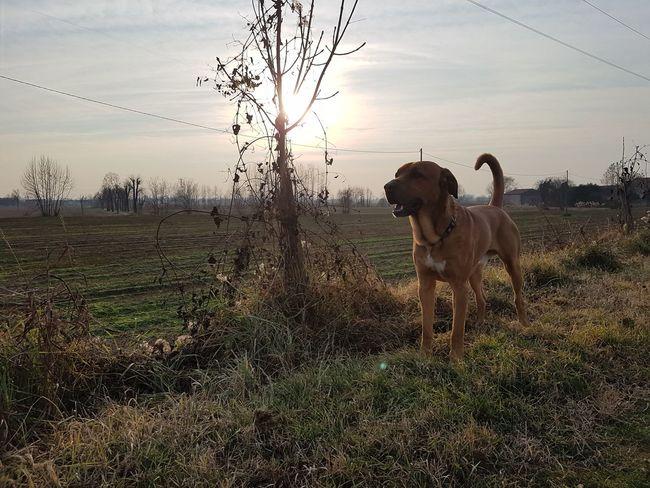 #lifestyle#sun Lifestyles Domestic Animals Sky No People Labrador Retriever Nature Outdoors Animal Themes