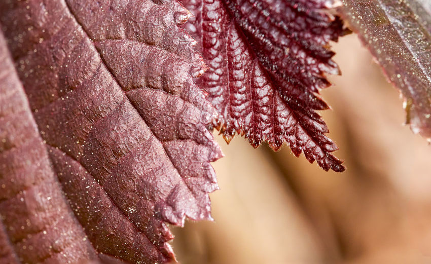 Close-up of autumnal leaves during winter