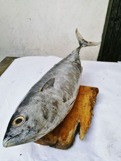 High angle view of dead fish on table
