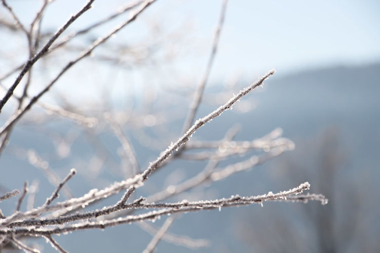 Crystall clear Winter Cold Temperature Snow Frozen Ice Nature Tree Plant Beauty In Nature Frost Branch No People Focus On Foreground Day Tranquility Twig Close-up Outdoors Environment Snowing Blizzard The Week on EyeEm