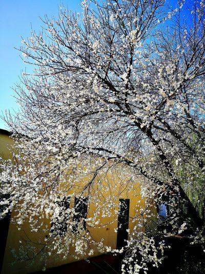 Outdoors Primavera