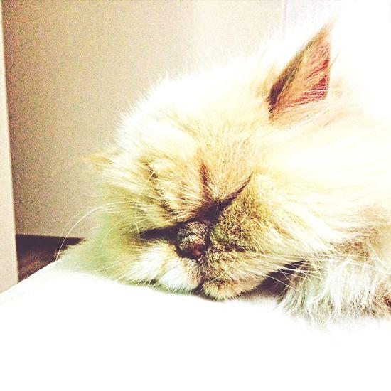 خوابه