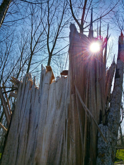 Showcase MarchThrough The Crack Broken Poplar Nature Trees Sile Park Treviso Italy Travel Photography Travel Traveling Mobile Photography Art Fineart Backlight Lens Flares Mobile Editing