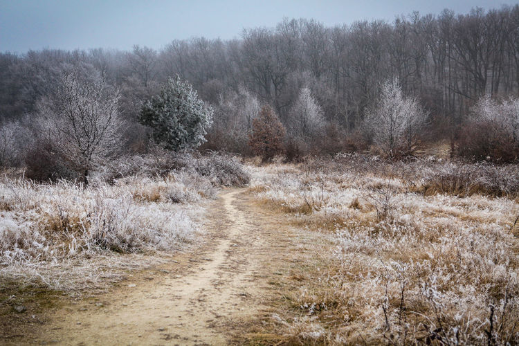 Plant Tree No People Land Landscape Nature Tranquility Scenics - Nature Day Tranquil Scene Environment Cold Temperature Winter Beauty In Nature Field Non-urban Scene Grass Outdoors Sky Trail Winter Frost Hoarfrost Pathway