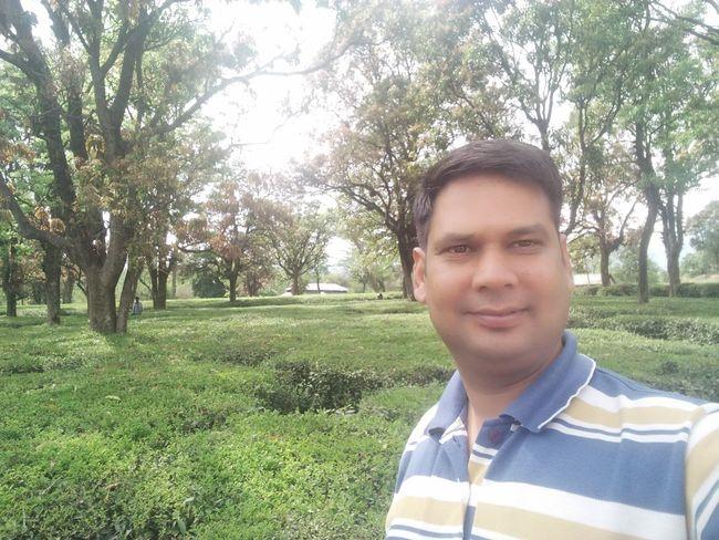 Tea garden city