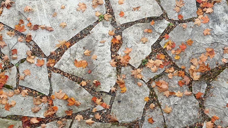 Autumn October From My Point Of View Outdoors Day No People Textured  Backgrounds Full Frame Maple Leaf Fallen Leaves Leaf Beauty In Nature Flagstone Flagstone Path Pattern