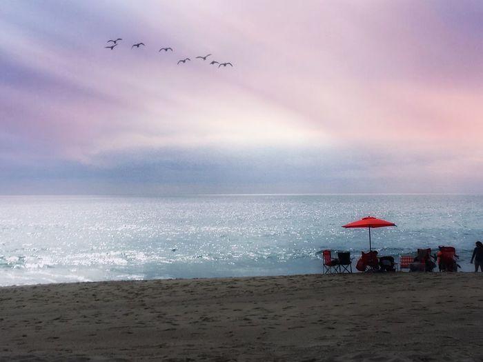 My Best Photo Beauty In Nature Beach Sky Water Land Sea Cloud - Sky Bird Horizon Over Water Nature Scenics - Nature Beauty In Nature Flock Of Birds Outdoors Sand