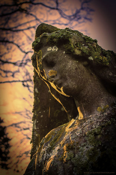 An old Angel Aged Stone Beauty In Nature Close-up Day Focus On Foreground Nature No People Non-urban Scene Outdoors Rock - Object Scenics Sculpture Selective Focus Sky Tranquil Scene Tranquility Tree Trunk