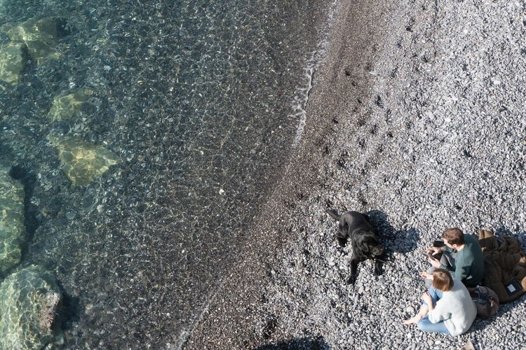High angle view of dog at beach