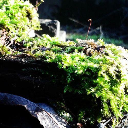 Lekker wandelen in het Kaapsebos Moss Wood