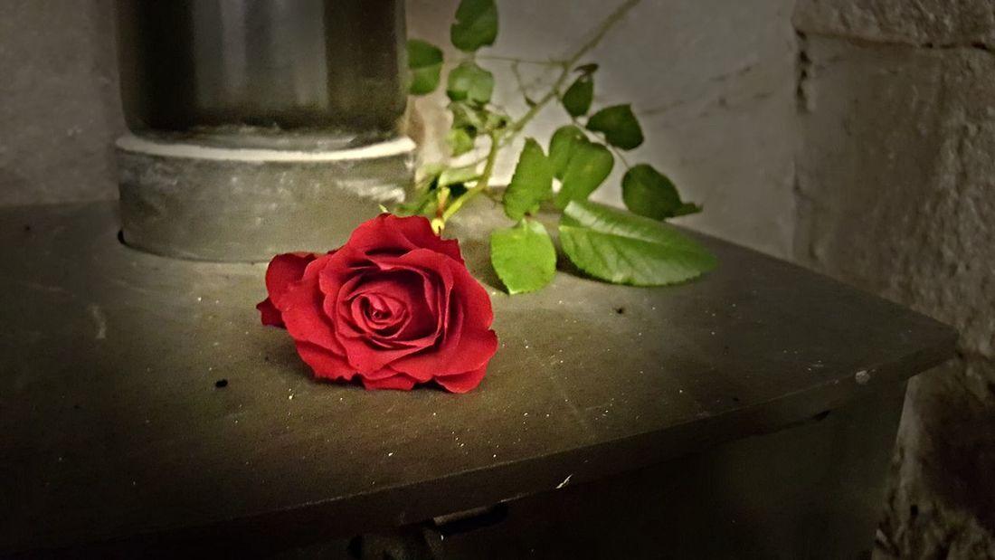 Rosy Light