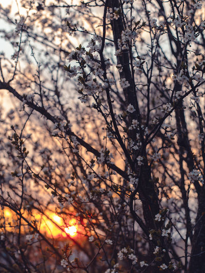 Tree Plant Branch Nature No People Beauty In Nature Bare Tree Tranquility Outdoors Sunset Sunlight Sky Focus On Foreground Silhouette Backgrounds Land Full Frame Forest Growth Dead Plant