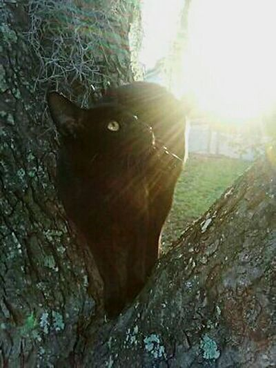 Sunshine On My Shoulders Sunset_collection Sunshine ♡ Cats N Trees Cats Of EyeEm Cats 🐱 Cat♡ Cat Lovers Catportrait
