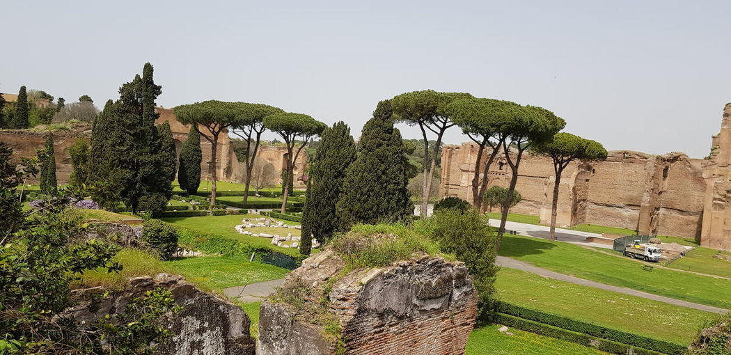 Old Rome Caracalla Caracalla Roma Tree Agriculture Grass
