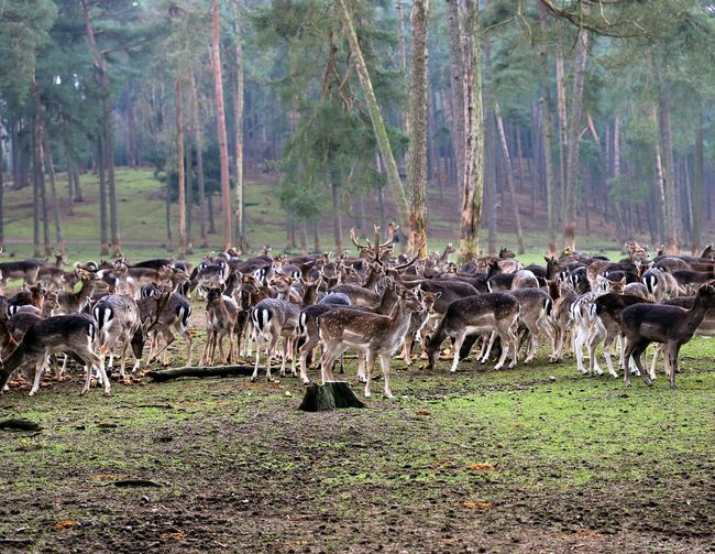 View of deer on field in forest