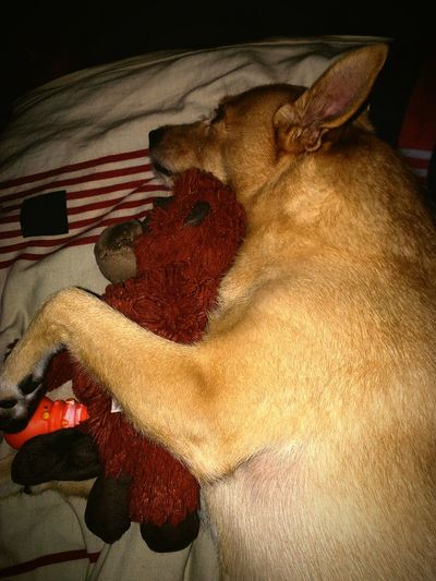 Tolik lásky 💕🐕 Czech Czech Republic Dog Sleep With Monkey Love Sleeping Dog Dog Love Sweetdreams  Jackie