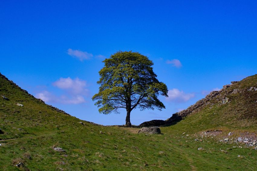 Perspectives On Nature Blue Tree Tranquility Single Tree Grass Nature Landscape Tree Trunk Tranquil Scene No People Outdoors Day Beauty In Nature Mountain Scenics Sky Clear Sky