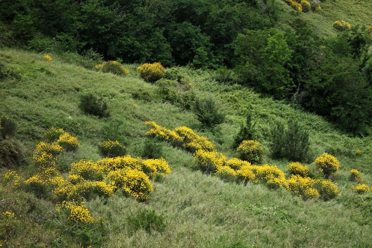 High angle view of plants on hill