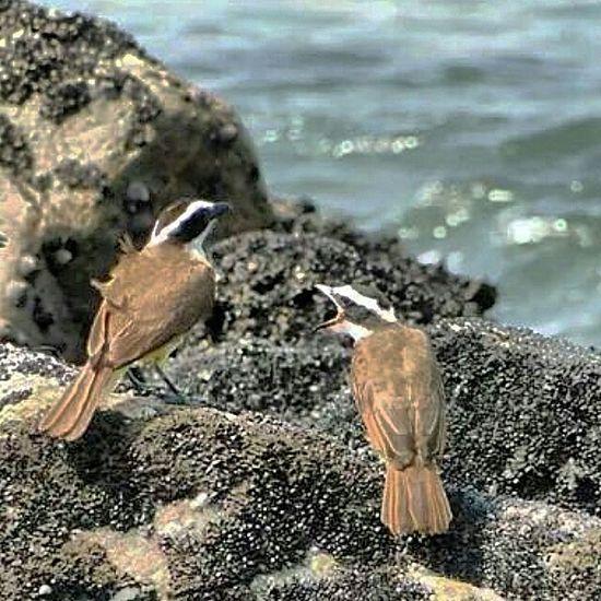 Birds Taking Photos Hellosummer  Beautiful Nature