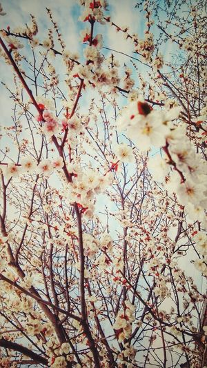 Spring🍃🌸🌻 Nature Beauty In Nature Sky Flower Day Springtime Growth Tree
