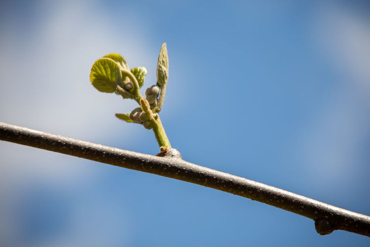 Low angle view of plant against sky