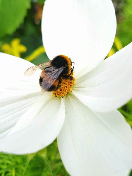Bee And Flower Beauty In Nature Day Plant Nature Bee On The Flower Lovephotography  Livelife Beautiful Place