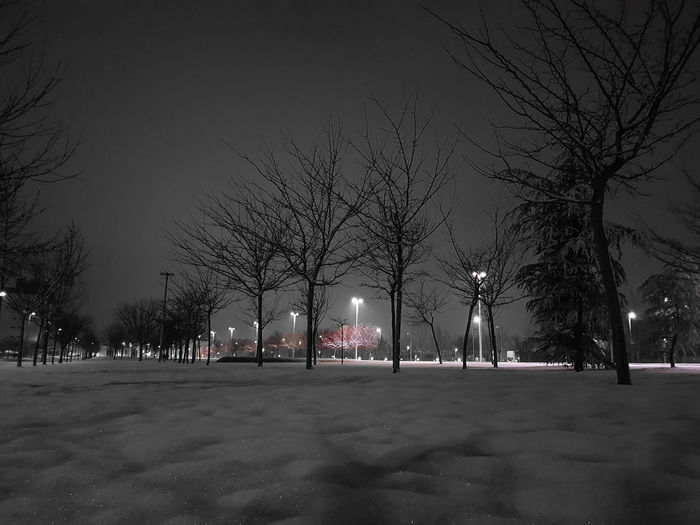 Bare trees in city at night