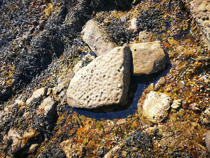 High angle view of pebbles on rock