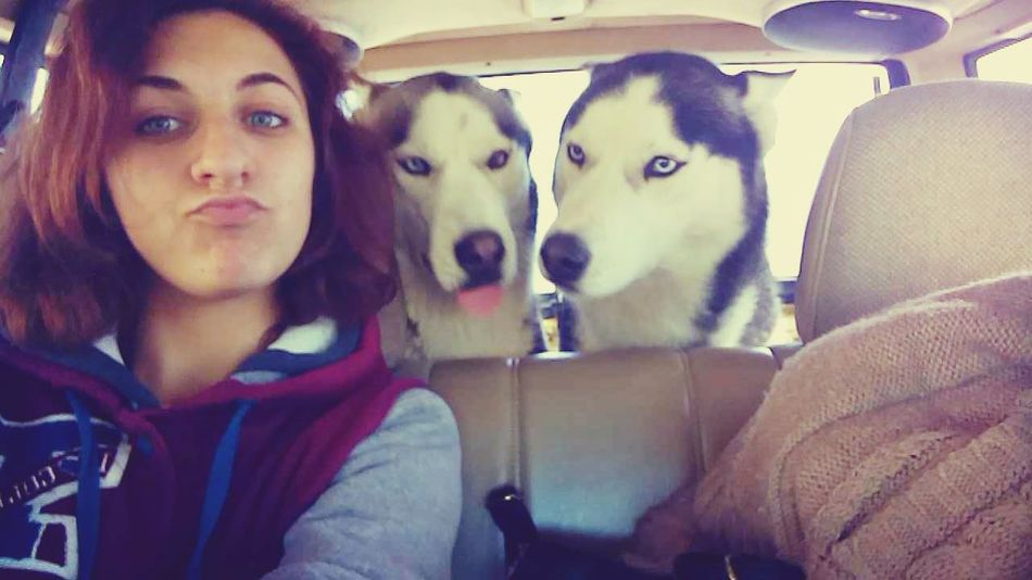 The Places I've Been Today In The Car With My Huskies Traveling Lovethemsomuch