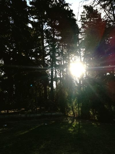 Trees among the sun Tree Nature Sunlight Beauty In Nature Outdoors Sky Day Growth No People Scenics
