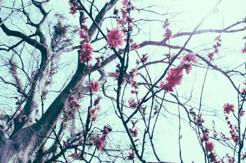 Flowers Flower Flowerporn Spring