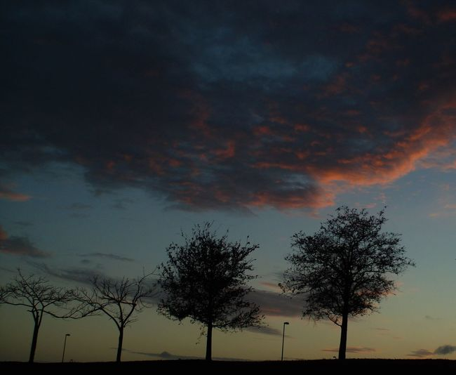a drive by quickie !!!!!! EyeEm Nature Lover TwoByTwo Bare Trees Beauty In Nature Cloud - Sky Low Angle View Scenics Silhouette Sunset Trees And Sky Trees With Leaves