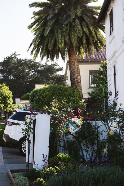 Home San Francisco USA Architecture Building Exterior Car Growth Outdoors Palm Tree Plant Tree