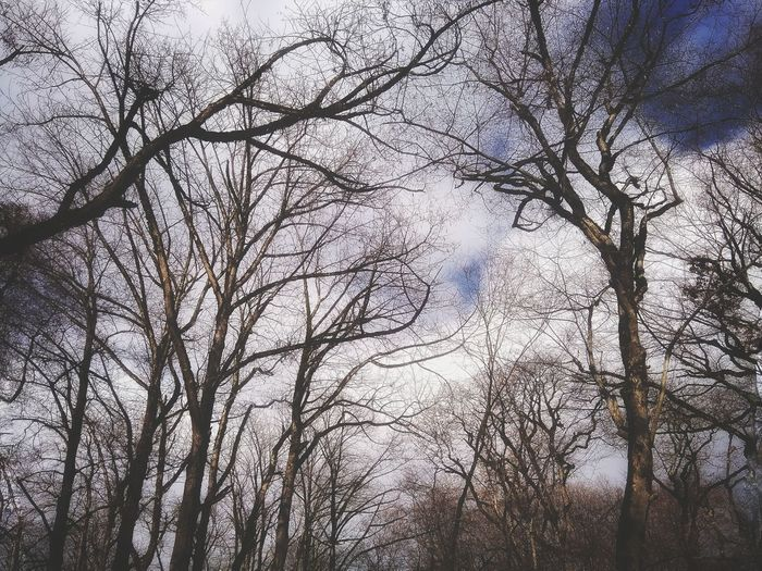 Tree Branch Low Angle View Beauty In Nature Nature Growth Sky