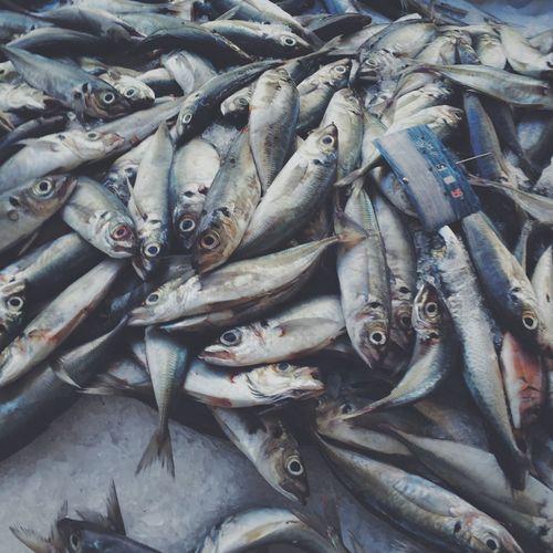 Le marché Market Seafood Fish Food