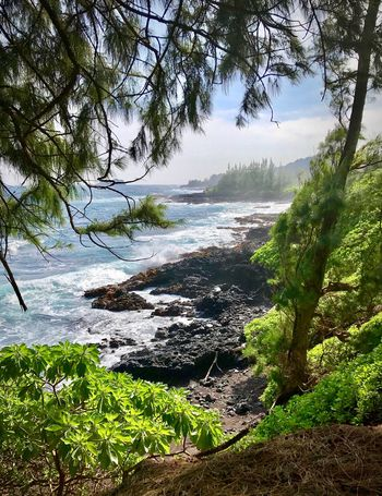 Hiking Maui Landscape_Collection Ocean View Hiking Trail Hiking View Ocean Water Nature Beautiful View Hawaii Maui Hiking EyeEm Nature Lover Tree Nature Beauty In Nature Water Tranquil Scene Scenics No People Day Outdoors Sea Landscape Beach Sky Wave